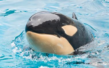 Amaya the Whale