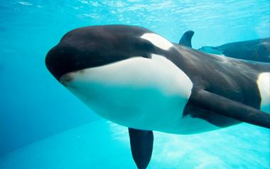 Makani the Whale