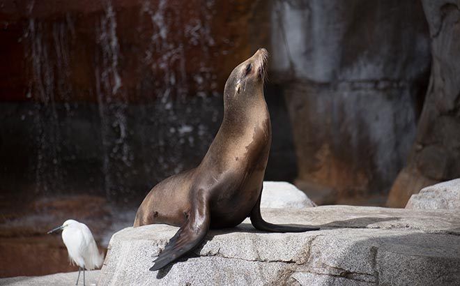 SeaWorld San Diego Sea Lion