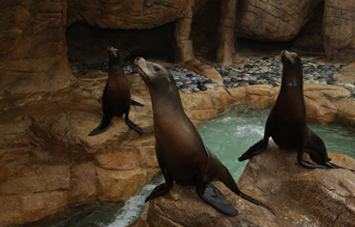 Sea Lions and Seals SeaWorld San Diego
