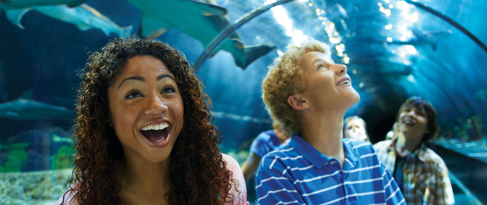 Shark Exhibit SeaWorld San Diego