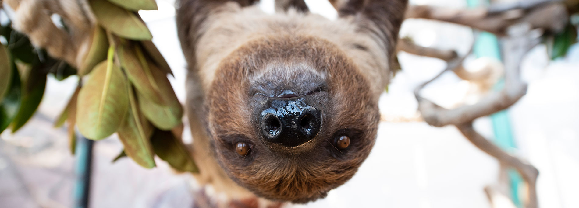 See Sloths at SeaWorld San Diego