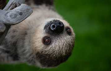 See Sloths at SeaWorld San Diego
