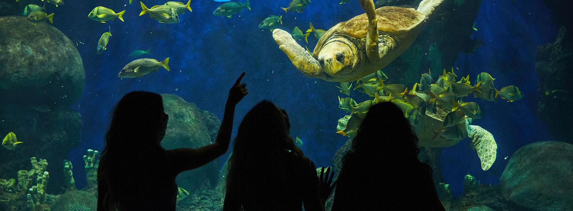 Green Sea Turtles SeaWorld San Diego