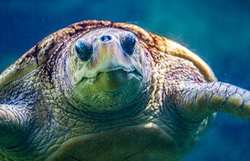 Turtles at SeaWorld San Diego