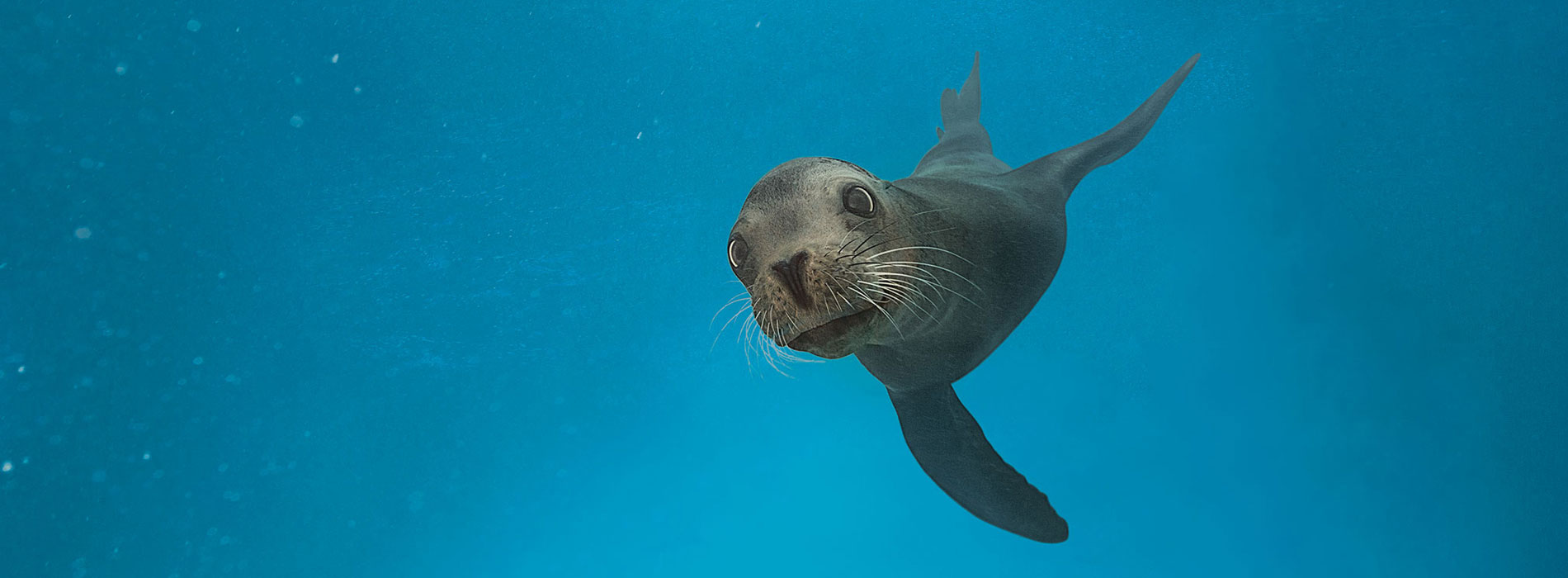 See playful sea lions at SeaWorld