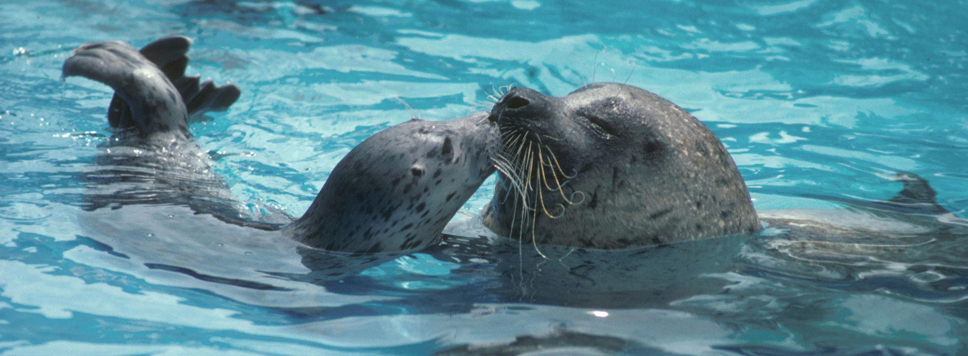 Watch seals and sea lions play at SeaWorld