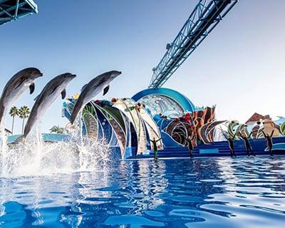 Christmas Celebration Dolphin Show