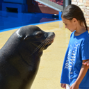 SeaWorld San Diego Blog