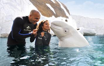 SeaWorld Beluga Interaction Program