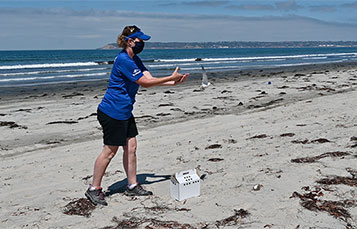 Bird return at the beach by SeaWorld San Diego