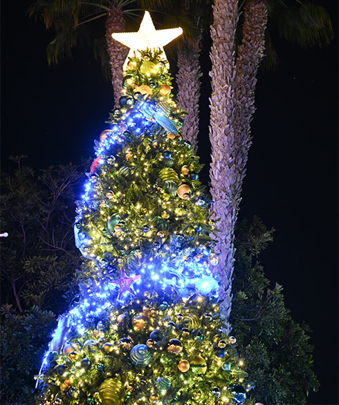 Christmas Tree at SeaWorld San Diego Christmas Celebration