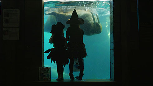 See animals at SeaWorld San Diego Spooktacular