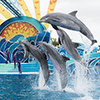 Callout Item Image Dolphin Show