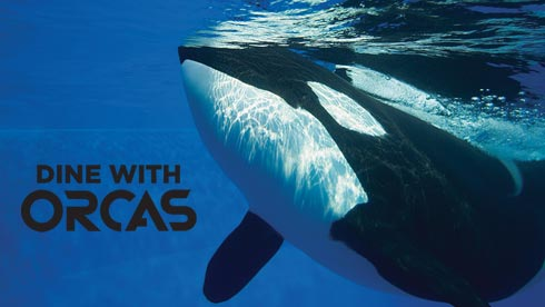Dine with Orcas at SeaWorld San Diego