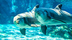See dolphins at SeaWorld San Diego