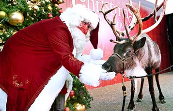 Santa Presents Christmas Animals Around the World at SeaWorld San Diego Christmas Celebration