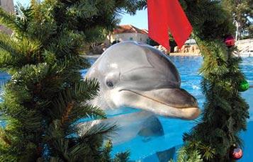 Dolphin Island Christmas