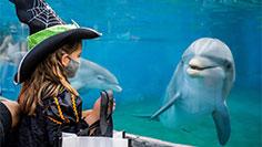 Halloween Spooktacular at SeaWorld San Diego