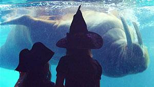 SeaWorld San Diego Spooktacular