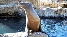 Inside Look Sea Lion