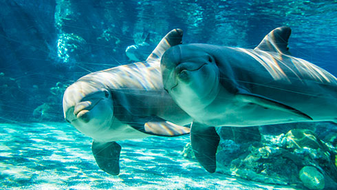 See amazing animals at SeaWorld San Diegos Red  White and Blue Salute