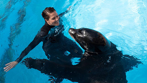 Animal presentations at SeaWorld San Diego