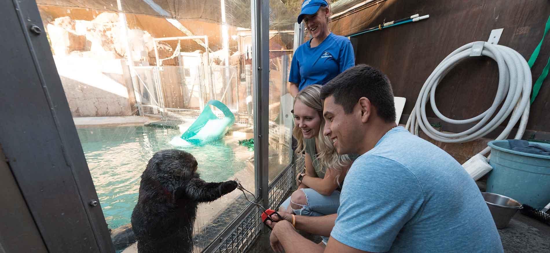 Sea Otter Encounter at SeaWorld San Diego