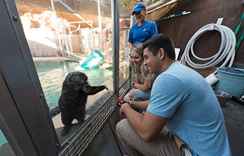 Sea Otter Encounter at SeaWorld San Diego