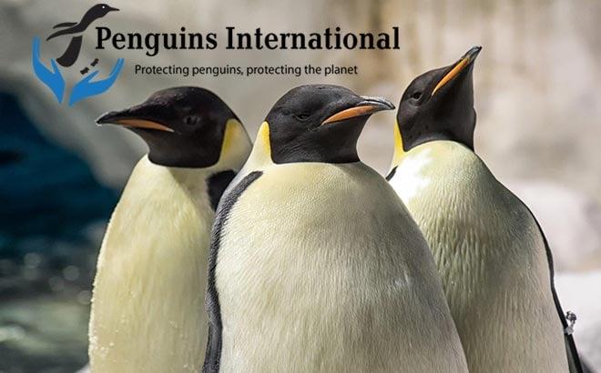 Penguins International