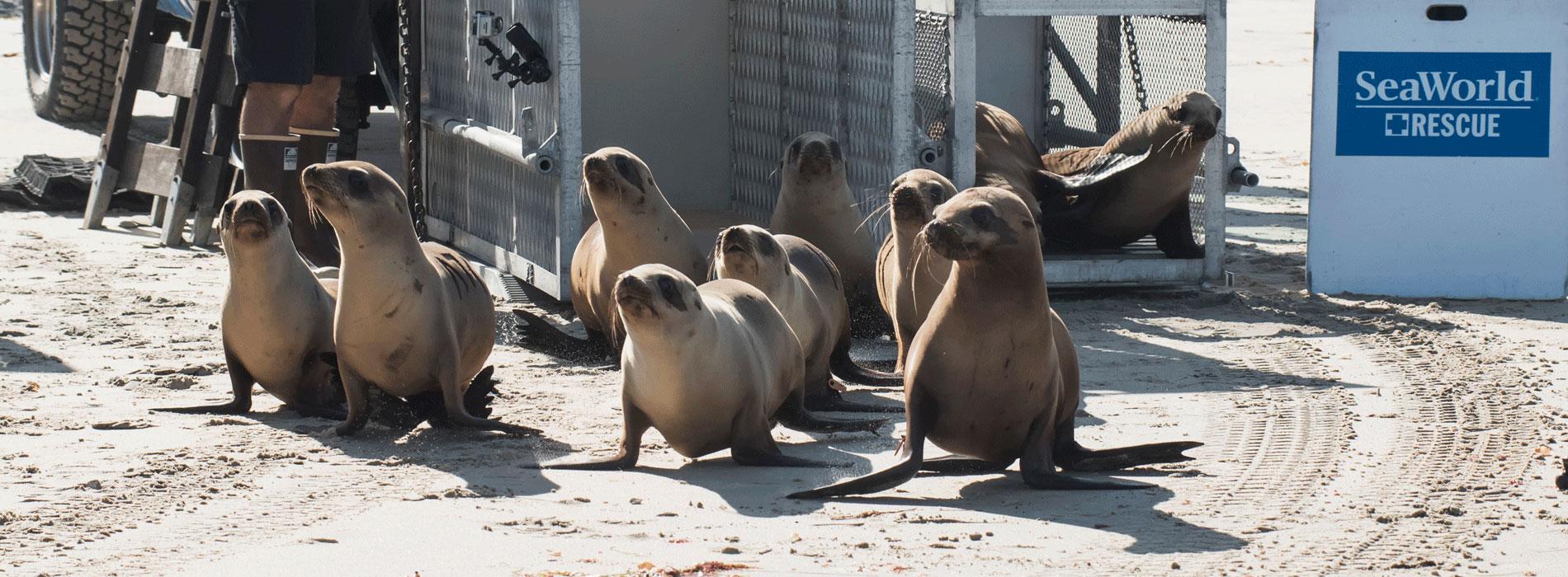 SeaWorld Blogs