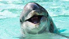 Animal Encounters at SeaWorld San Diego