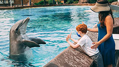 Animal Experiences at SeaWorld San Diego