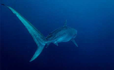 OCEARCH Partnership Policy