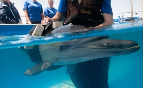 OCEARCH Partnership Rescue