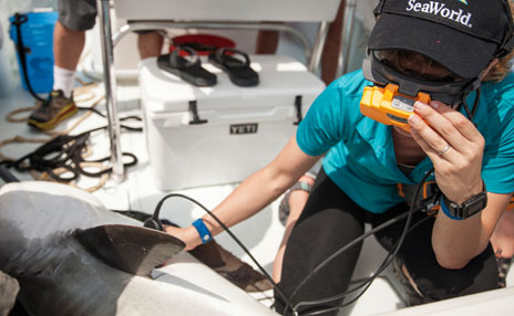OCEARCH Partnership Research