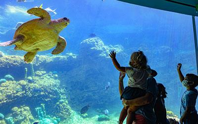 November Pass Member Rewards at SeaWorld San Diego