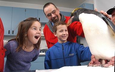 Penguin Tour
