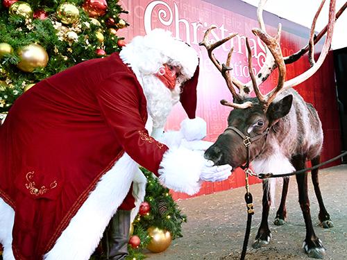 Santas Animal Meet and Greet SeaWorld San Diego