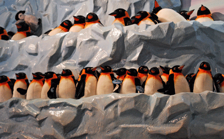 Penguin Gifts at SeaWorld San Diego