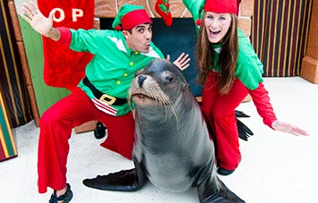 Sea Lion Christmas Special Show