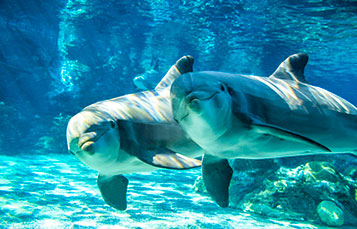 Dolphin days at seaworld san diego