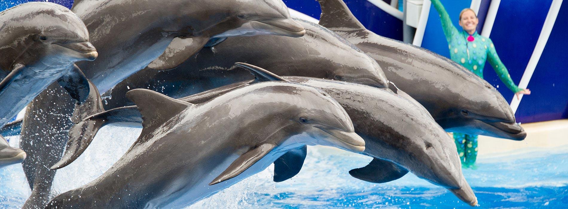 Dolphin Days