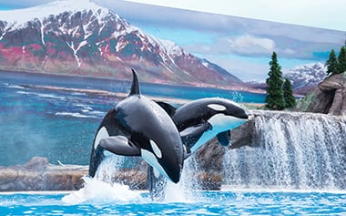 Orca Encounter at SeaWorld San Diego
