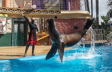 Sea Lions Live show at SeaWorld San Diego