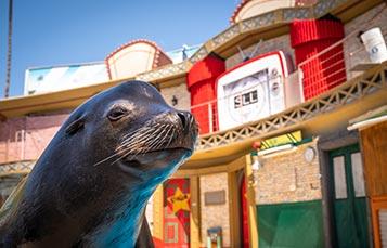 Sea Lions Live at SeaWorld San Diego