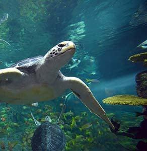 Turtle Reef at SeaWorld San Diego