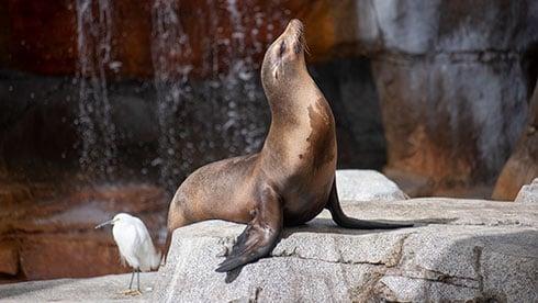 Sea lions at seaworld san diego