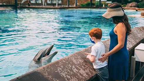 Dolphin interaction at seaworld san diego
