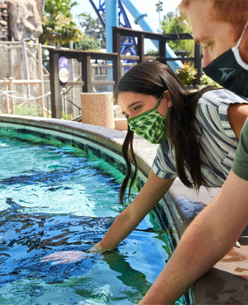 Bat ray touch pool at seaworld san diego